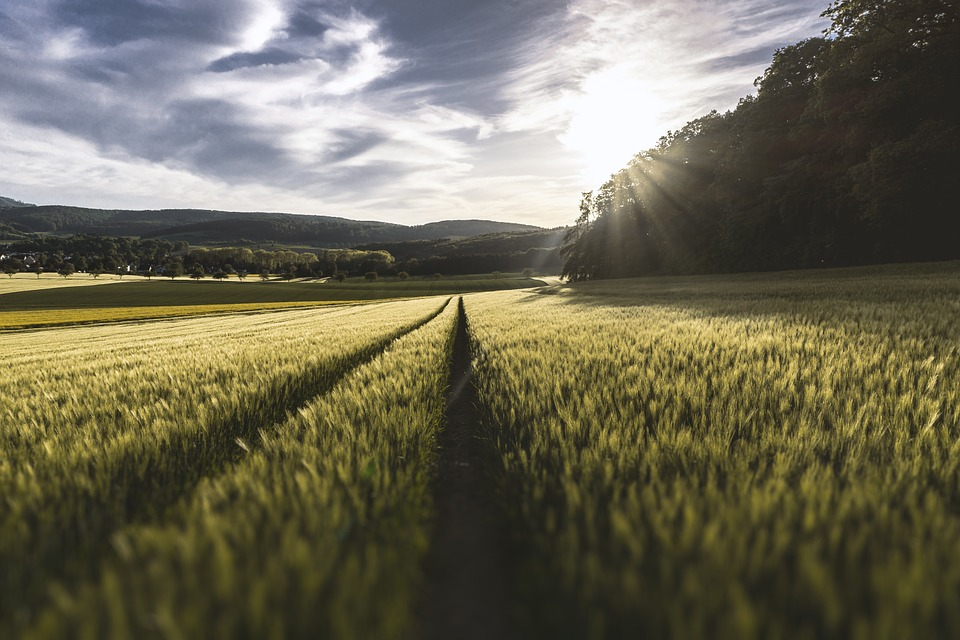 Investir Dans Des Terres Agricoles Malin
